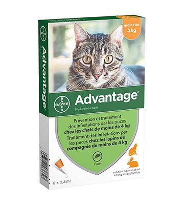 Bayer Advantage pour chat pipettes (6 pipettes)