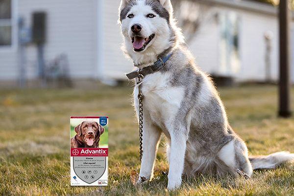 Bayer Advantix Dog Spot-on